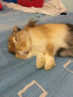 Uno stanchissimo Bamby cerca casa!