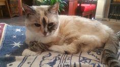 Hey Nineteen! Hi Reddit meet Yin. She is 19 years old today. http://ift.tt/2rF61Z1