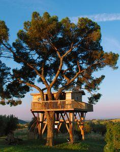La piantata black cabin treehouse arlena di castro - Baumhaus architekturburo ...