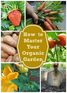 This guide breaks it down and makes organic gardening simple!   It may seem difficult, but an organic garden will quickly prove rewarding and worthwhile. From getting outside to eating your own, home-grown vegetables...