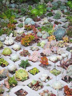 cactus & wood