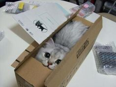 He wanted to come out of the box to help with Quantum Mechanics but he was told to stay in there... for science. http://t.co/3AMgAJdj1C   by @SciencePorn