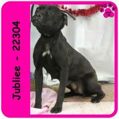 Jubilee (F) - Adult Terrier mix (recently weaned puppies it appears) In need of rescue or adopter