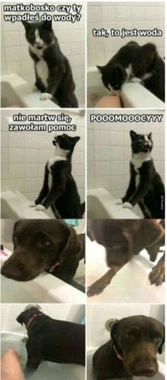 20 Hilarious and Funny Animal Memes Make Me Laugh Funny Animal Pictures Of The Day - 22 Pics 29 Hilarious Dog Memes and Pictures See the funniest dog memes and pictures here as doggos and puppers do what they. Funny Animal Memes, Cute Funny Animals, Funny Animal Pictures, Funny Cute, Funny Dogs, Funny Memes, Funniest Animals, Funniest Pictures, Animal Pics