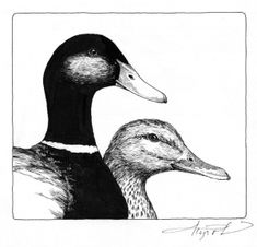 """The Outside Story: """"Dissolute Dabblers,"""" by Meghan McCarthy McPhaul. Illustration by Adelaide Tyrol. """"Robert McCloskey's Make way for Ducklings is one of my favorite childhood books. I loved the way Mr. and Mrs. Mallard interacted, their seemingly endless search for the perfect nesting place…"""""""