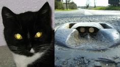 Cat Eyes Inspire Road Markers