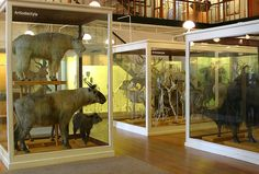 Harvard Museum of Natural History - the 19thC displays have been 'refreshed' but remain essentially unchanged - wonderful
