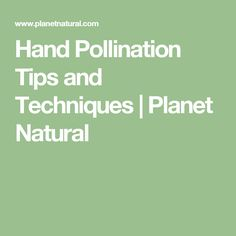 What's hand pollination? It's the process of helping Mother Nature along in her attempts to bring fruits, even if those fruits are vegetables. Tomato Garden, Tomato Plants, Best Tasting Tomatoes, Tomato Pruning, Growing Tomatoes, Dried Tomatoes, Science Fair, Plant Care, Mother Nature