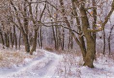 Winter road to the wood - Winter road to the wood