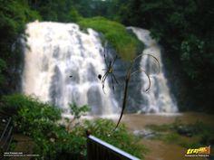 Abbi falls near Madikeri at Coorg, Kodagu district, Karnataka