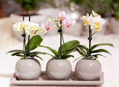 Rădăcinile aeriene ale orhideelor – Iată ce trebuie să faceți cu ele - Pentru Ea Indoor Tropical Plants, Indoor Orchids, Artificial Orchids, Orchids Garden, Orchid Plants, Nylon Flowers, Exotic Flowers, Beautiful Flowers, Orchid Flower Arrangements