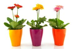 Reduce Indoor Air Pollution with Houseplants - Healthy Home - Mother Earth Living