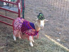 Pretty Goat Do you Love Goats? https://www.facebook.com/pages/Goat-Lovers/1516802911894015