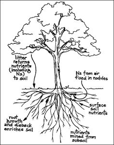 Nitrogen Fixing Trees - The Multipurpose Pioneers | Permaculture Research Institute - Permaculture Forums, Courses, Information, News and Wo...