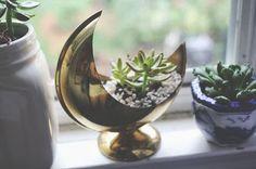 succulent in moon planter