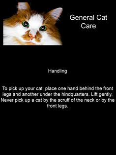 General Cat Care