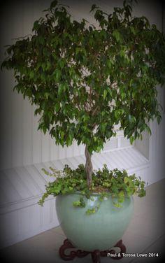 Interior garden trees