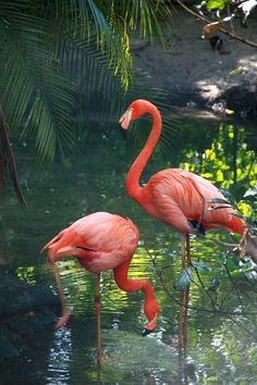 15 Amazing Ways to Use Castor Oil for Beautiful Skin and Hair Beautiful colors and scenery. Beautiful colors and scenery. Flamingo Wallpaper, Flamingo Art, Pink Flamingos, Flamingo Beach, Pretty Birds, Beautiful Birds, Animals Beautiful, Cute Animals, Exotic Birds