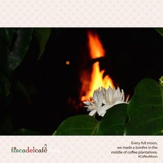Every full moon, we made a bonfire in the middle of coffee plantations. #CoffeeMoon #FullMoon #Bonfire #Travel #Tourism #Coffee #Colombia #CoffeeTriangle #CoffeeCulturalLandscape #Planning #Wanderlust #Luxury #LifeStyle #Traveler #LuxuryLifeStyle #FirstClassMagazine #FirstClass #CoffeeTime #Caffeine #Instacoffee #CoffeeOfTheDay #TravelGram #TravelInGram #Travelling #InstaPassport #InstaTravel #WorldTraveler #WorldTravel #Trip #World | We are a luxury hotel in a coffee farm. fincadelcafe.com