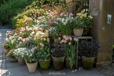 Claus Dalbys trädgård - del 1