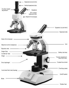 microscope labeled