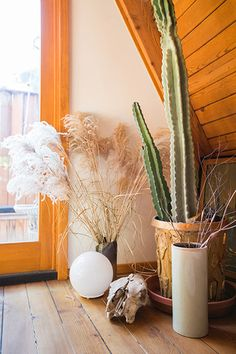 Cacti - The Weirdest Interior Trends That Are Actually Awesome - Photos