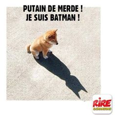 Unless you can be batman. Then be [BATMAN] Funny Animal Jokes, Really Funny Memes, Stupid Funny Memes, Cute Funny Animals, Funny Animal Pictures, Cute Baby Animals, Funny Cute, Funny Shit, Funny Dogs