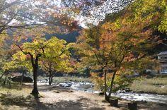 As Folhas Vermelhas de Korankei (Aichi)