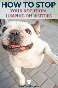 Not everyone is a dog lover, and many people don't appreciate being bounced on by Fido as soon as they walk through your front door. In this article, we take a look at how you can teach your dog not to jump up at strangers, both in and out of your home. Dog Training Techniques, Dog Training Tips, R Dogs, Dogs And Puppies, Cool Dog Houses, Dog Facts, Best Dog Food, Outdoor Dog, Dog Behavior