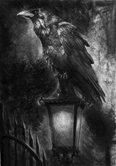 raven on gaslight in dark Crows Ravens: Crow Art, Raven Art, Bird Art, Dark Fantasy, Fantasy Art, Rabe Tattoo, Gravure Photo, Quoth The Raven, Jackdaw
