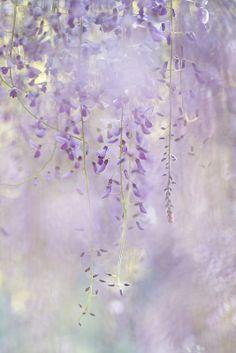 Mint en lavender, hints of light yellow Flowers Nature, Love Flowers, My Flower, Beautiful Flowers, Soft Purple, Shades Of Purple, Purple Haze, Yennefer Of Vengerberg, Purple Aesthetic