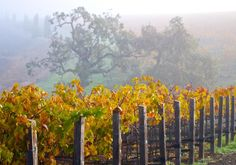 Use these tips for visiting Napa Valley to stay comfortable, get out of traffic and have a great time.