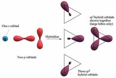 One s orbital and two p orbitals can hybridize to form three equivalent sp2 hybrid orbitals. The large lobes of the hybrid orbitals point toward the corners of an equilateral triangle.