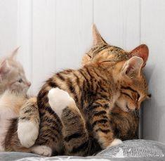 Imagenes+De+Gatos+Abrazados+Tiernamente