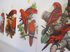 4 Frameable prints Parrots Tropical Cockatiels Bird by booksygirl