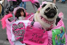 "Funny Pug Dog Meme Pun LOL ""It's all about me"""