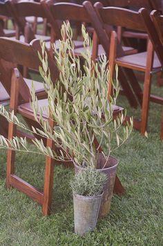 Les moineaux de la mariée: Ô mon bel olivier...