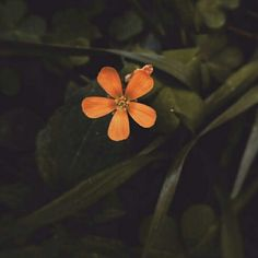 Finding the beauty in simple things