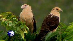 Magistrados deberán resolver antes del 11 de noviembre consulta sobre Ley de Vida Silvestre