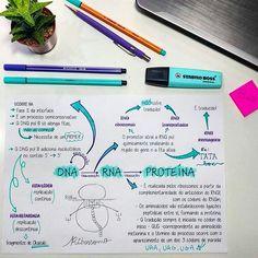 Plano De Estudos Para O ENEM e Vestibulares