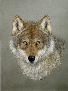 "<meta name=""keywords"" content=""Original,Pastel Drawing,Gray Wolf,Timber Wolf,Porter family""> Cool Art Drawings, Animal Drawings, Animal Illustrations, Dog Drawings, Wolf Face Drawing, Lion Walking, Pastel Portraits, Pastel Paintings, Wolf Painting"