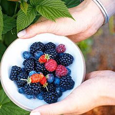 10 best berries to plant now | Planting and Care | Sunset.com