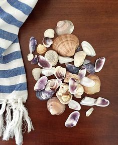 657 best coastal obsessions coral seashells images in 2019 rh pinterest com