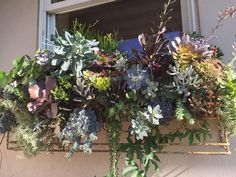 Lovely succulent window box