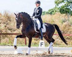 market_equi_hohenstaufen_01 I need this horse!