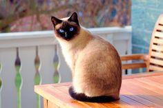 Soy Un Gato Soyungatocom Perfil Pinterest