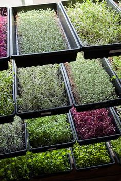 Ever Consider Starting a Microgreen Farm