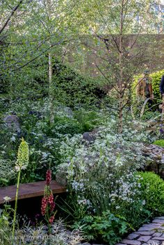 #Chelsea Flower Show 2014 Harry & David Rich, Rich Landscapes, Vital Earth The Night Sky #Garden