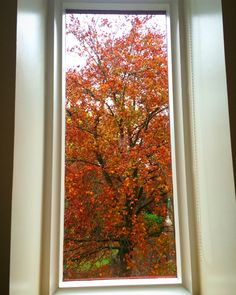 Window at saltwell park featuring autumn colours