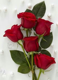 Pin By Narendra Pal Singh On Good Morning Flowers Red Roses And Purple Purple Love, All Things Purple, Purple Rain, Purple Stuff, My Flower, Pretty Flowers, Purple Flowers, Rose Violette, Beautiful Red Roses